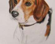pet_portrait_beagle