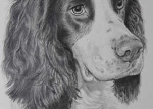 pet_portrait_spaniel
