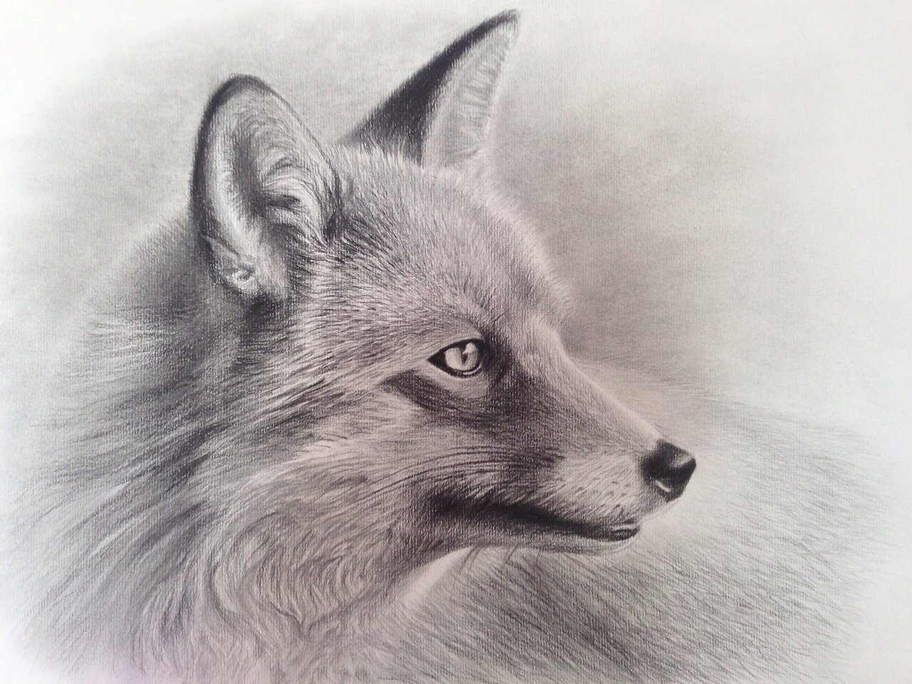 portrait_fox