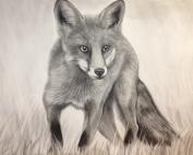 portrait_fox2