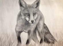 portrait_fox2