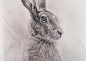 portrait_hare