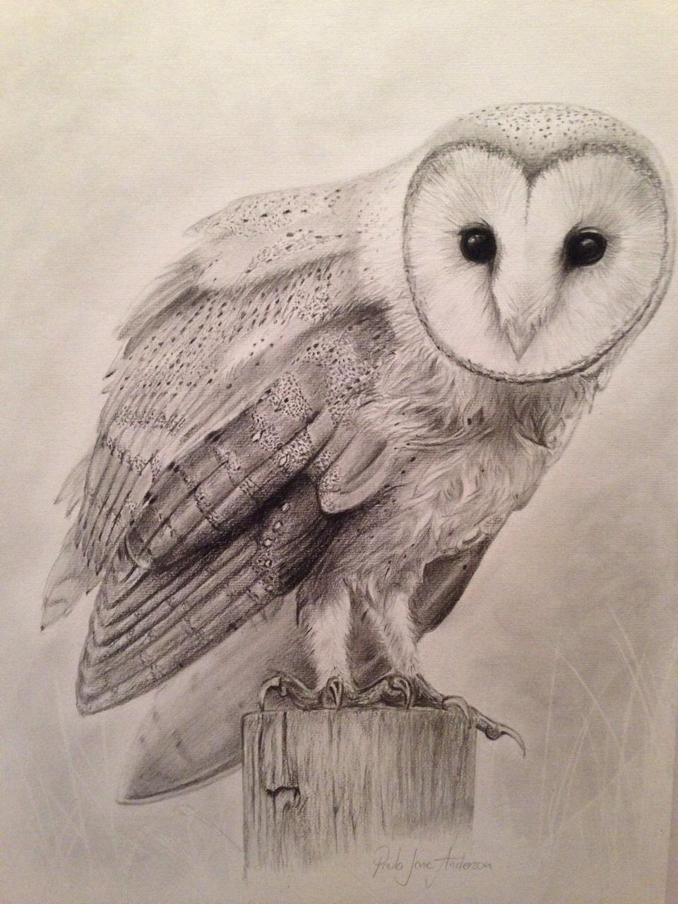 portrait_owl