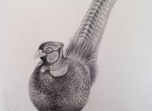 portrait_pheasant
