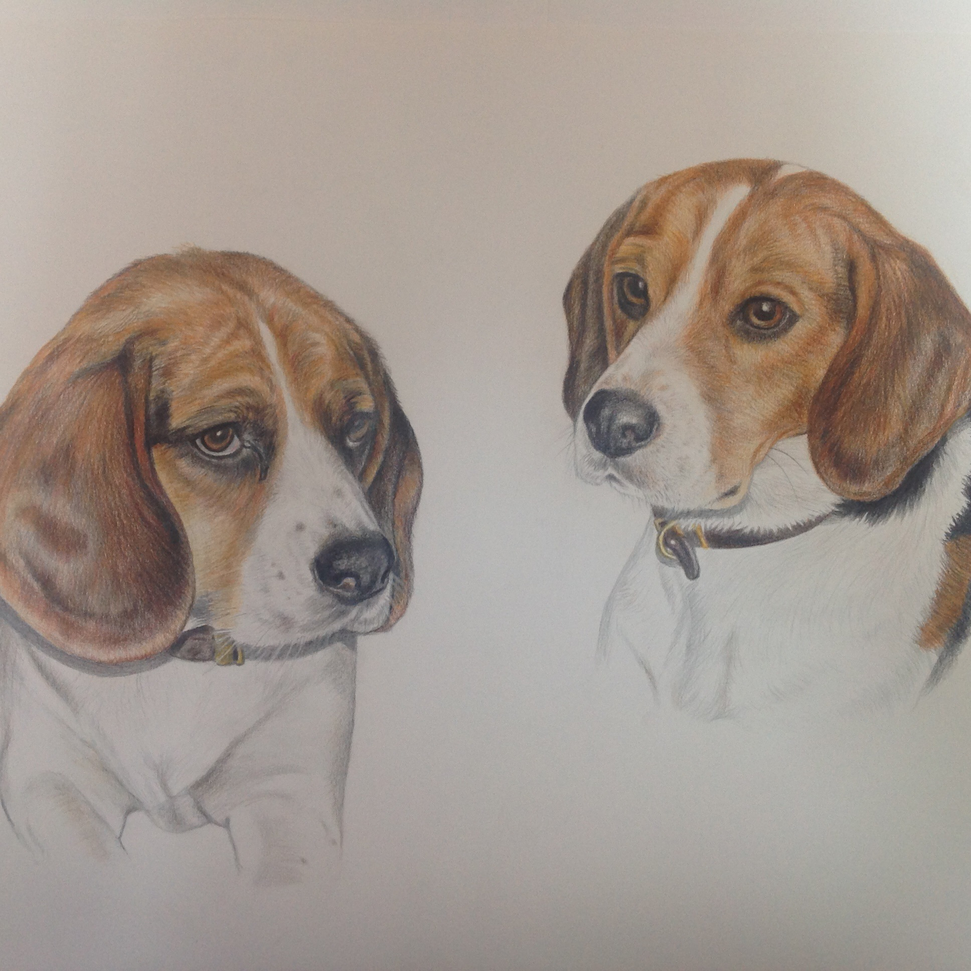 two_beagles_pet_portrait